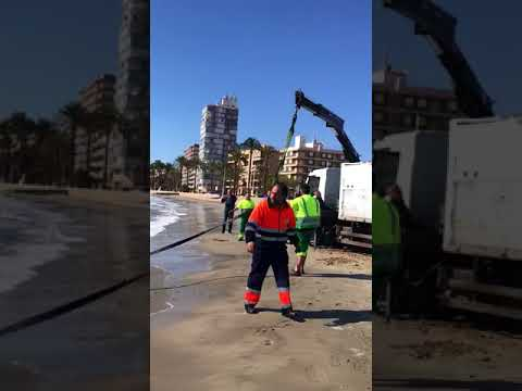 Tiburon muerto en la playa de levante en Santa Pola (Diario de Alicante)