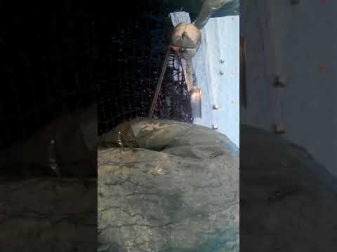 Работа в Южной Корее на морской капусте КИМ. Собираем урожай☺