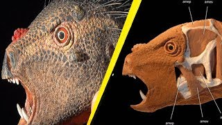 5 Bizarre Recently Discovered Creatures That Will Blow Your Mind!