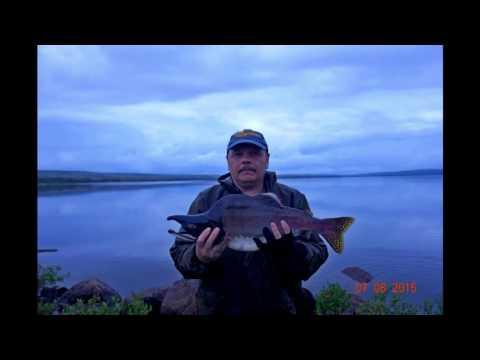 гремиха островной рыбалка
