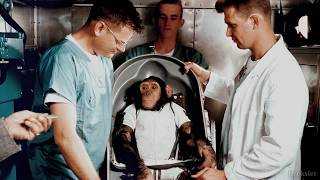 Ham - The First Chimp Who Went To Space | Science Of Space