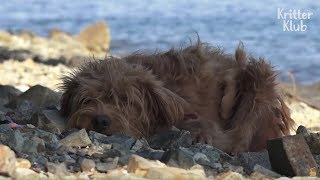 Two Dogs Are Found Stranded On A Deserted Island | Animal in Crisis EP17