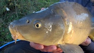 "Carp Fishing With Meat - ""The Meat Feeder"""