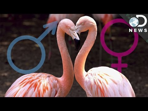 Why Bird Sex Chromosomes Are Weird