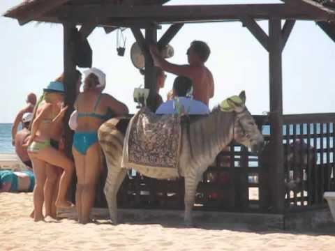 Ослик-зеброид на пляже