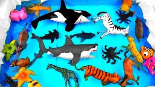 Wild Animals Toys For Babies - Learn Colors With Wild Animals For Children