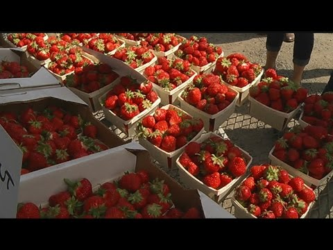 WMass farmers hoping to benefit from Boston Public Market