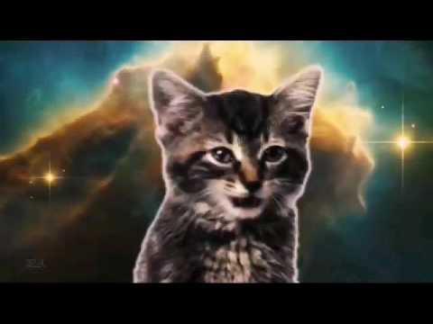 Space + котята 2