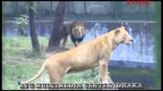 Dhaka zoo ( চিড়িয়াখানা ) chiriakhana... lion+tiger+horse+birds & other..mirpur dhaka..