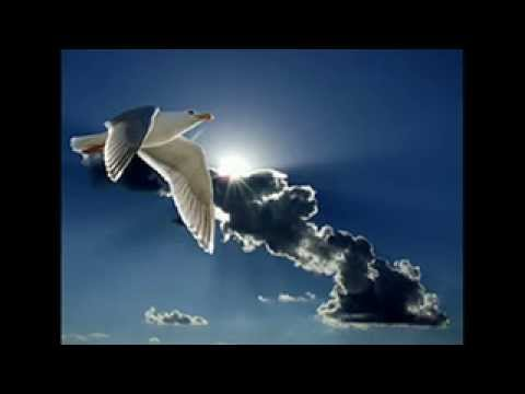 Mercury Rev-First Time Mother&#039;s Joy(Flying)
