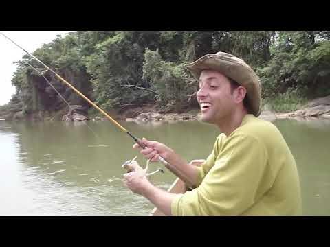 36 pacús em 3 horas de pesca no Rio Pará - MG