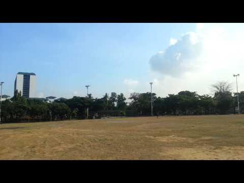 (Majestic Wings) Sun Conure Free Flight Quirino Grandstand Manila Philippines