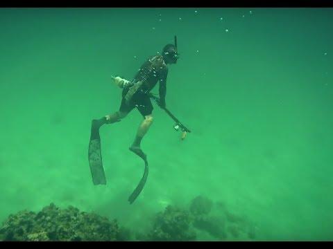 Diving Persian Gulf