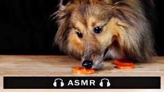 ASMR Dog Eating Sounds 🐶 #115 먹방 No talking Carrot vs Kibble