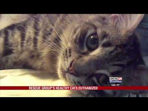 Animal Rescue Volunteer Has Healthy Cats Euthanized