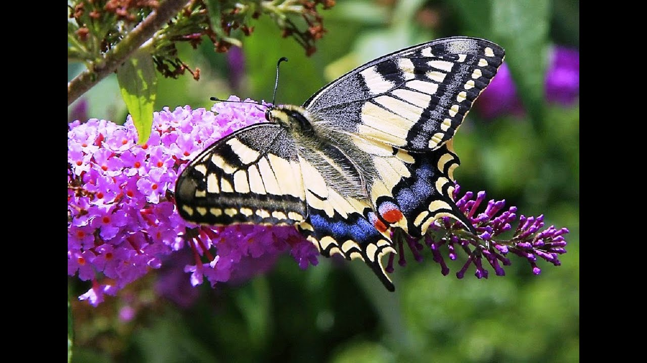 butterflies and flowers 1 hour nature meditation with