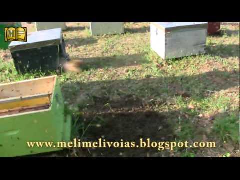 Αφεσμός   μελισσοκομία Music Videos