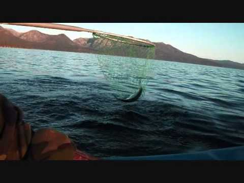 Tahoe Kokanee Fishing
