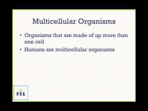 multicellular organism. Black Bedroom Furniture Sets. Home Design Ideas