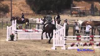 122S Suze Randall Knipe SR Novice Rider Show Jumping Shepherd Ranch June 2013