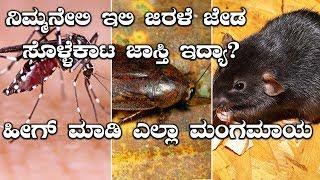 ಮನೆಯಿಂದ ಇಲಿ, ಜಿರಳೆ, ಜೇಡ ಹಾಗು ಸೊಳ್ಳೆಗಳನ್ನ ಹೋಗಲಾಡಿಸಲು ಸರ ಮನೆಮದ್ದುಗಳು   Oneindia Kannada