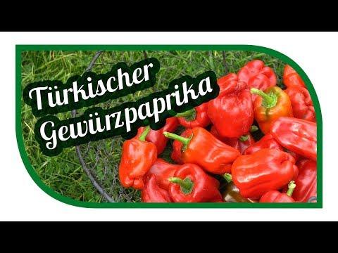 Paprika erfolgreich anbauen