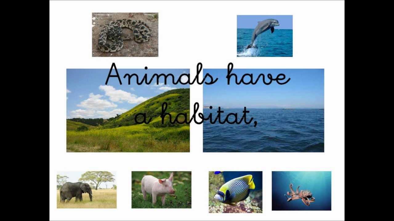 animals habitat song   youtube