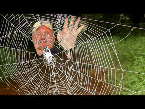 WORLD'S STRONGEST SPIDER WEB