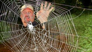 WORLD'S STRONGEST SPIDER WEB