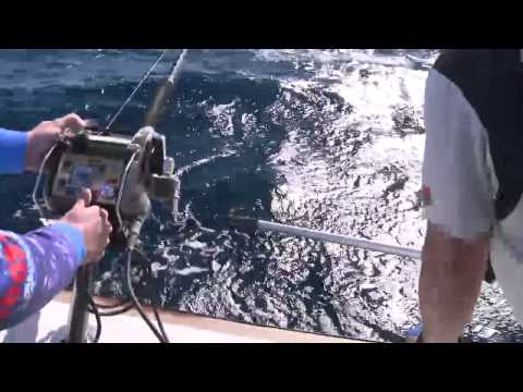 SYDNEY KINGS, GEMFISH & Blue Eye Cod