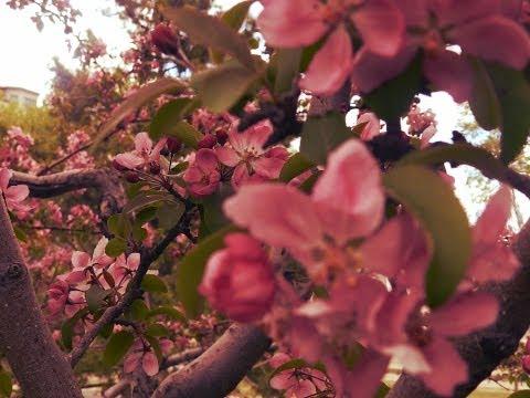 Primavera Canadense (Fotos e Reflexão)