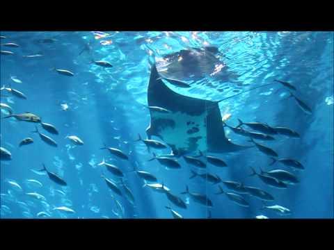Georgia Aquarium Tour Part 4 of 5 Ocean Voyager
