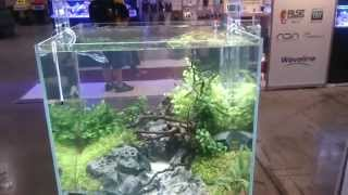 Beautiful Aquascapedo tanks at PIAA tradeshow 2014