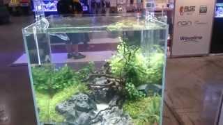 Beautiful Aquascapedo tanks at PIAA tradeshow 2014