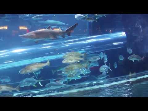 Shark Tank Aquarium in Golden Nugget Casino of Las Vegas - Water Slide
