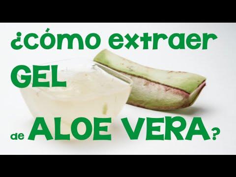 Cómo extraer el gel de aloe vera o sábila: Obtención de aloe a partir de su planta