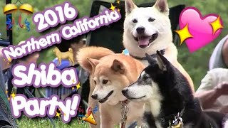 2016 Northern California Shiba Party!
