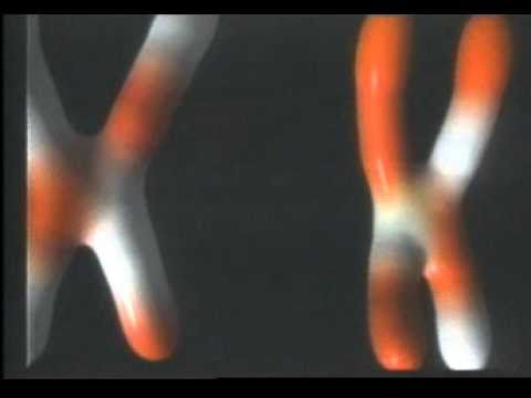 Meiosis.mpg video
