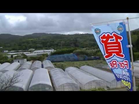 今帰仁村与那嶺 2LDK 9.9万円 一戸建