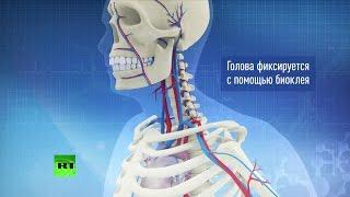 Ученые провели уникальную операцию по пересадке головы обезьяне