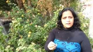 Shivlingi Seeds (Beej) Benefits for Infertility in Females - Dr. Meenakshi Chauhan