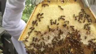 Cathedral Hive  New  Hexagonal Top Bar Hive