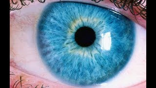 HOW IT WORKS: The Human Eye
