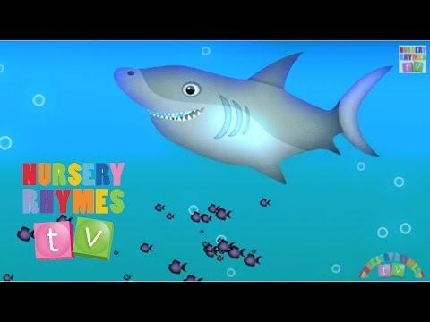 Animals in the Ocean. Nursery Rhymes TV. Toddler Kindergarten...