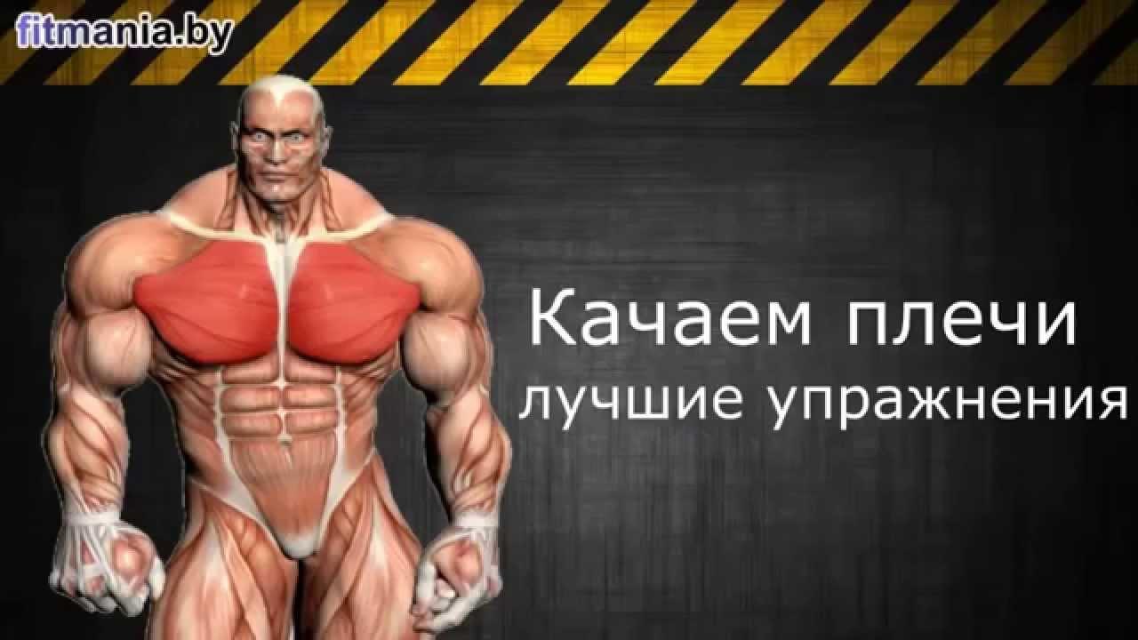Зале. упражнения. смотреть онлайнКак накачать плечи Базовые упражнения. Ба