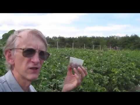 Биологический метод борьбы с колорадским жуком, by Entomologist in Ukraine