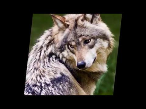 Animales en Peligro de Extincion 2014 HD