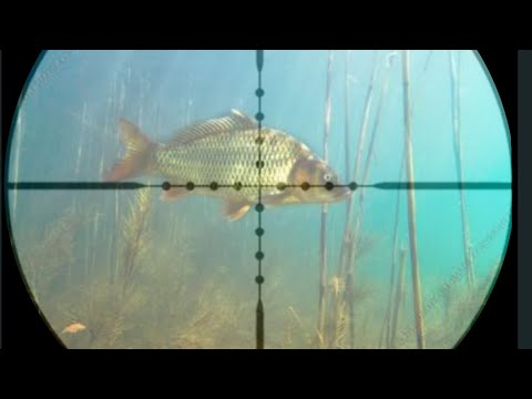 Airgun Fishing Part_3. How to control Pest fishes.