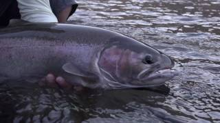 Skagit Revolution: Skagit Casting Tutorial by Tom Larimer