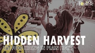 Hidden Harvest - The food hiding in plain sight